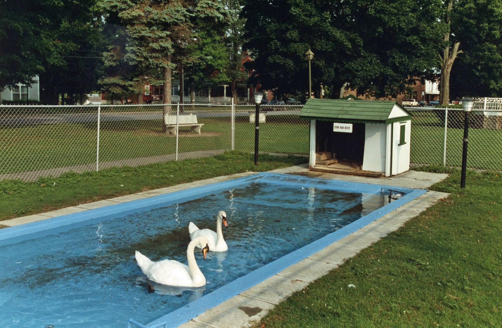 my visit with sam u0026 betty swanton vermont u0027s royal swans participle